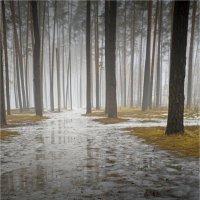 Весна в лесу. :: Laborant Григоров