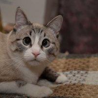 Котенька :: Полина Бесчастнова