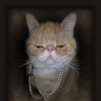 Все кошки ...как кошки,а Я....КОРОЛЕВА!))))))) :: Людмила Богданова (Скачко)