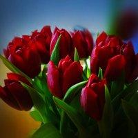весна тюльпаны :: Natalie