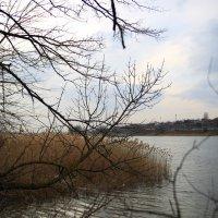 Первые дни марта, Дон :: Леонид