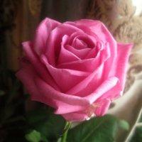 С наступающим праздником, дорогие женщины! Счастья и любви Вам! :: Елена Семигина