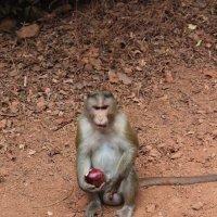 обезьяны Матерана :: maikl falkon