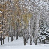 Зимний парк :: Наталья Тагирова