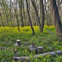 Опять весна вырвалась... :: Константин Николаенко