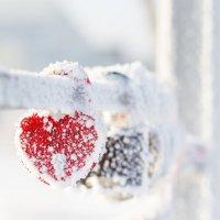 Морозный день :: Елена Дорогина