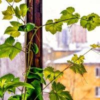 зима +лето = весна! :: Натали Акшинцева