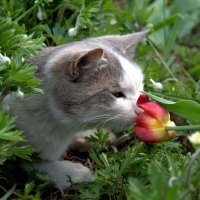 Пахнет... весной :: Наталья Димова