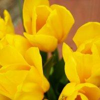 Жёлтые тюльпаны :: Galina Belugina