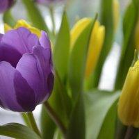 Праздник весны :: ЕСЕНИЯ ♥