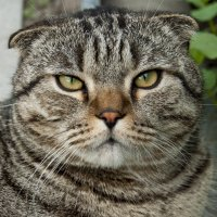Cat's look :: Roman Ilnytskyi