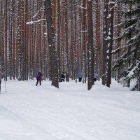 лыжники :: Наталья Зимирева
