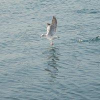 Танец на воде :: Елена Нор