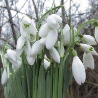 Весна... :: Анастасия Iva