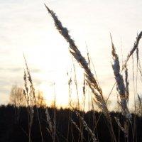 закат зимой :: Андрей Дружинин
