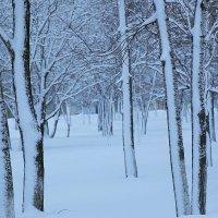 после снегопада. :: сергей