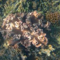Подводный мир :: Lukum