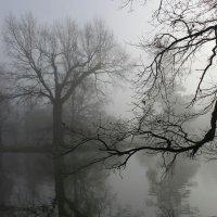 Ползут по деревьям туманы :: Юрий. Шмаков