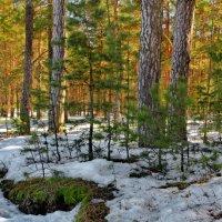 Уже беспомощны снега... :: Лесо-Вед (Баранов)
