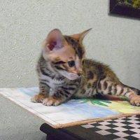 Малышка :: натальябонд бондаренко