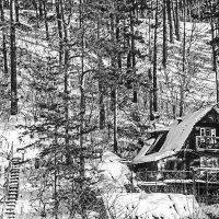 Дом в лесу :: Станислав
