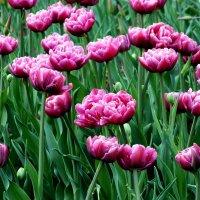 С праздником Весны!!! Счастья, Дорогие женщины!!! :: Александр Прокудин