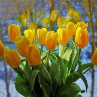 Всех женщин поздравляю с 8 Марта! :: Svetlana Viktorovna
