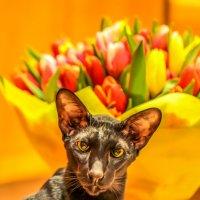 От лица всех мартовских котов и от себя лично ПОЗДРАВЛЯЮ С ПРАЗДНИКОМ МИЛЫХ ДАМ! :: Ашот ASHOT Григорян GRIGORYAN