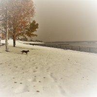 Зимняя осень :: люба