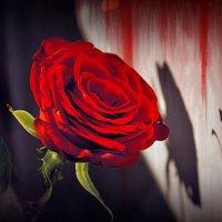 Алая, как кровь :: Наталия Лыкова