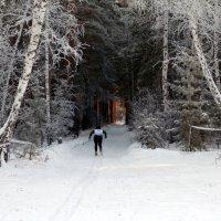Лыжня :: Анатолий Фирстов
