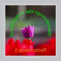 С праздником 8 марта! :: allphotokz Пронин