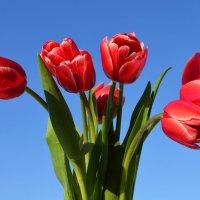 Весна!!! :: Вера Андреева