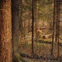 В мартовском лесу :: sergej-smv