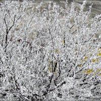 прощание зимы :: Надежда