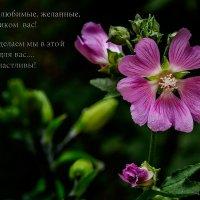 * :: Владимир Горубин