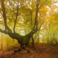Танцующий лес :: Елена Решетникова