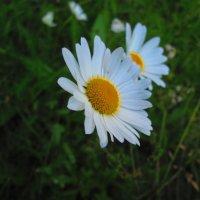Простота и естественность :: Полина