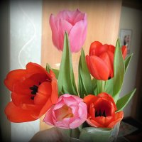 Праздник весны . :: Мила Бовкун