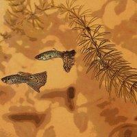 Рыбки и тени :: Наталья Лунева
