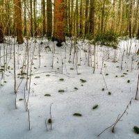 Буд-то мыши на снегу :: Милешкин Владимир Алексеевич