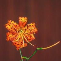 Цветы прошедшего лета :: Анатолий Иргл