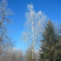 Зима. :: Александр Атаулин
