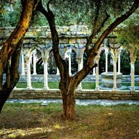 В тени оливкового сада... :: Ирина Falcone