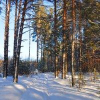 Зимой в лесу :: Алексей http://fotokto.ru/id148151Морозов