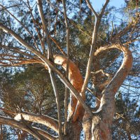 Дерево :: Алексей http://fotokto.ru/id148151Морозов