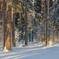 Зимний лес :: Краснов  Ю Ф