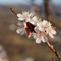 весна :: Альбина