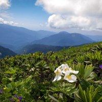 Вид с горы Аибга (2320м над уровнем моря). :: Надежда