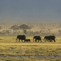Жизнь Африканской саванны :: Марина Мудрова
